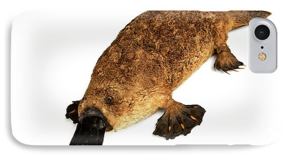 Duck-billed Platypus IPhone Case