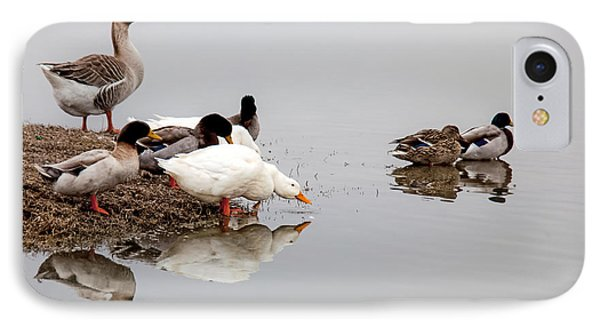 Duck Duck Goose Goose... IPhone Case by Mark Alder