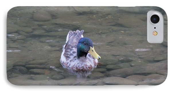Duck On Water IPhone Case by Kathy Long
