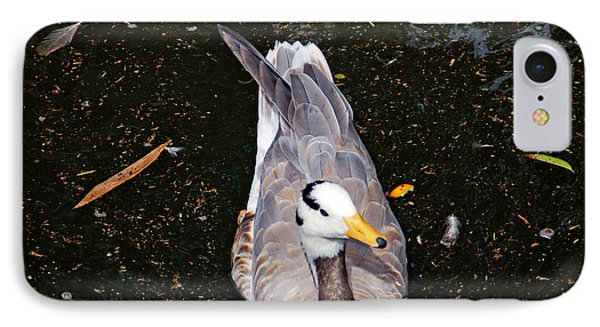 Duck Portrait IPhone Case by Aimee L Maher Photography and Art Visit ALMGallerydotcom