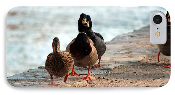 Duck Walk IPhone Case by David Jackson