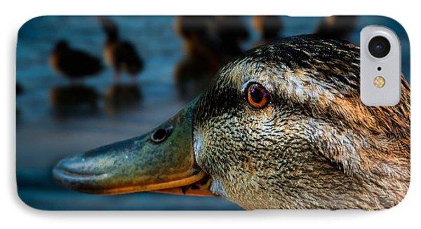 Duck Watching Ducks Phone Case by Bob Orsillo
