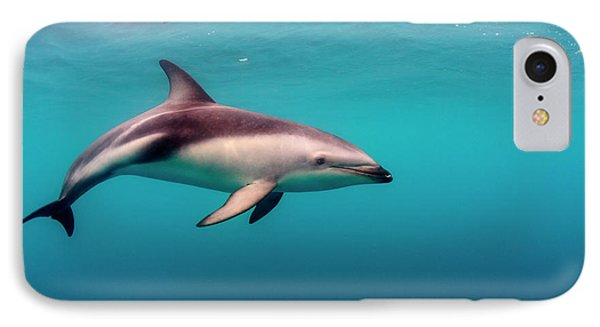 Dusky Dolphin (lagenorhynchus Obscurus IPhone Case by James White