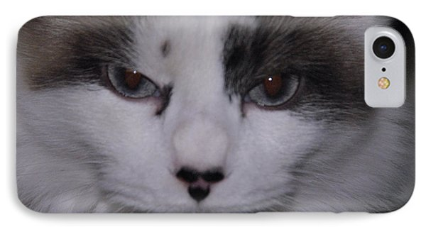Dusty - The Cat's Meow IPhone Case by Robyn Stacey