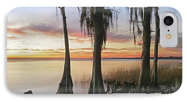 Dwarf Cypress Trees Covered IPhone Case by Tim Fitzharris