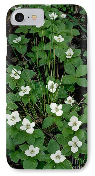 IPhone Case featuring the photograph Dwarf Dogwood by Doug Herr