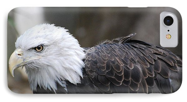 Eagle With Ruffled Feathers IPhone Case by DejaVu Designs