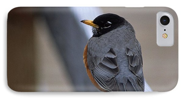IPhone Case featuring the photograph Early Bird by Sharon Elliott
