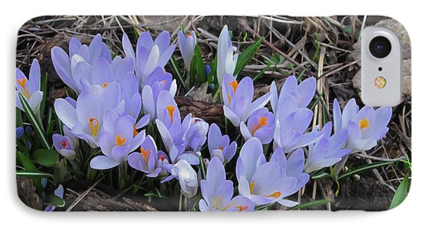 IPhone Case featuring the photograph Early Crocuses by Donald S Hall