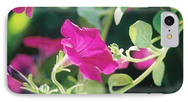 IPhone Case featuring the photograph Early Morning Petunias by Alan Lakin