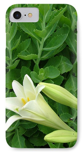 Easter Lily IPhone Case by Natasha Denger