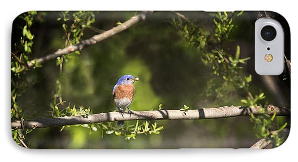 Eastern Blue Bird At Sunrise Phone Case by Cris Hayes