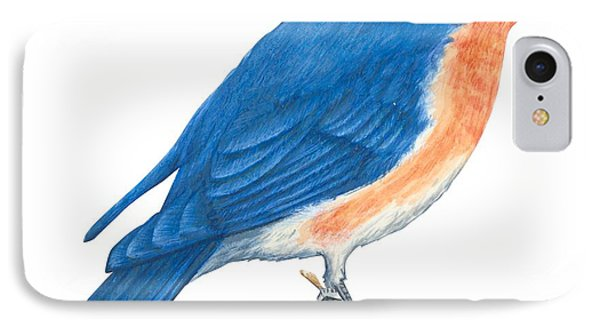 Eastern Bluebird IPhone Case by Anonymous