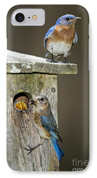 Eastern Bluebird Family IPhone Case by Anthony Mercieca