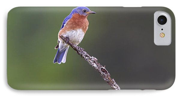 IPhone Case featuring the photograph Eastern Bluebird by Gary Hall