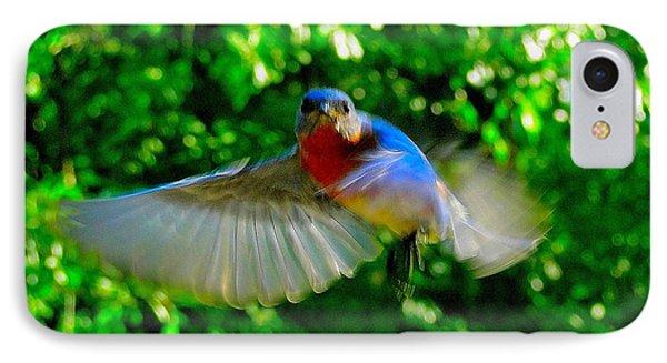 Eastern Bluebird In Flight IPhone Case by Cindy Croal