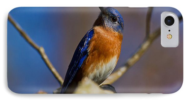 IPhone Case featuring the photograph Eastern Bluebird by Robert L Jackson
