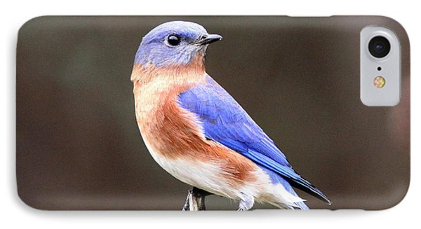 Eastern Bluebird - The Old Fence Post Phone Case by Travis Truelove
