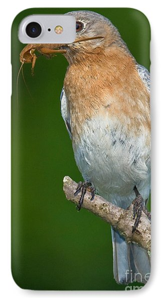 IPhone Case featuring the photograph Eastern Bluebird With Katydid by Jerry Fornarotto