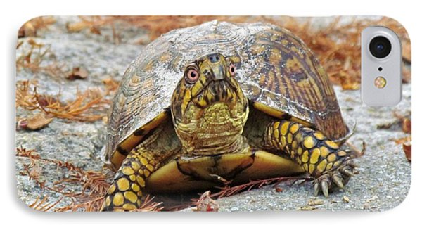 IPhone Case featuring the photograph Eastern Box Turtle by Cynthia Guinn
