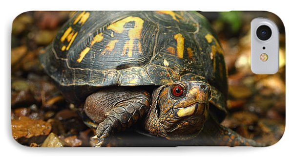 Eastern Box Turtle IPhone Case by Michael Eingle