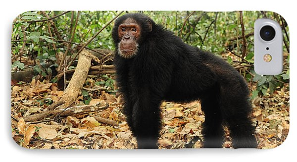Eastern Chimpanzee Gombe Stream Np IPhone 7 Case by Thomas Marent