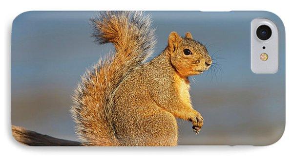 Eastern Fox Squirrel (sciurus Niger IPhone Case