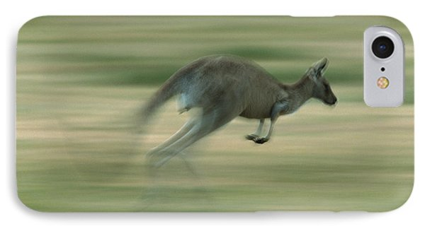 Eastern Grey Kangaroo Female Hopping Phone Case by Ingo Arndt