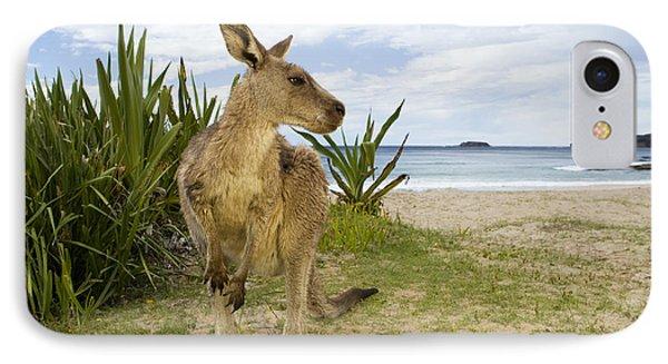 Eastern Grey Kangaroo Pebbly Beach IPhone Case by Sebastian Kennerknecht