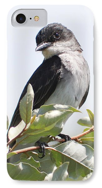 IPhone Case featuring the photograph Eastern Kingbird by Anita Oakley