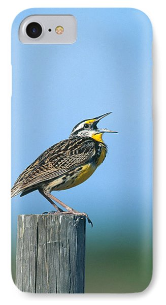 Eastern Meadowlark IPhone 7 Case by Paul J. Fusco