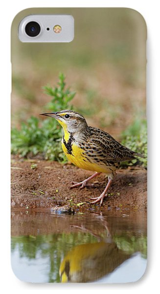 Meadowlark iPhone 7 Case - Eastern Meadowlark (sturnella Magna by Larry Ditto
