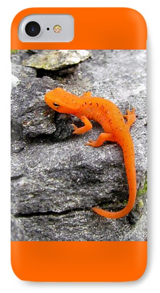 Orange Julius The Eastern Newt IPhone Case by Lori Pessin Lafargue
