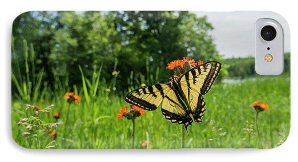 Eastern Tiger Swallowtail  Papilio IPhone Case by Julie DeRoche