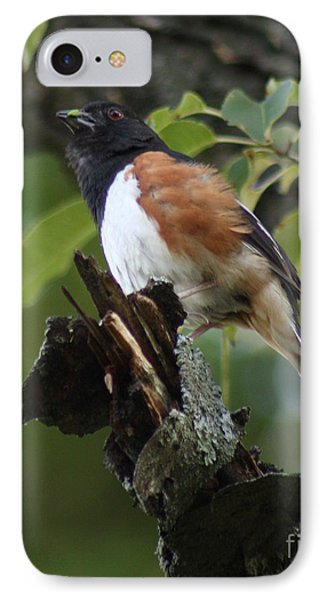 IPhone Case featuring the photograph Eastern Towhee by Anita Oakley
