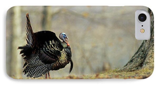 Eastern Wild Turkey (meleagris IPhone Case