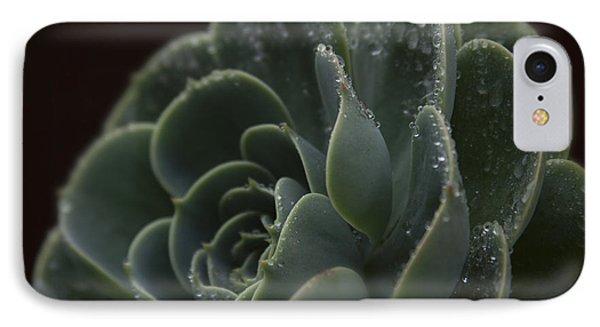 Echeveria Elegans X Lola - Crassulaceae Phone Case by Sharon Mau