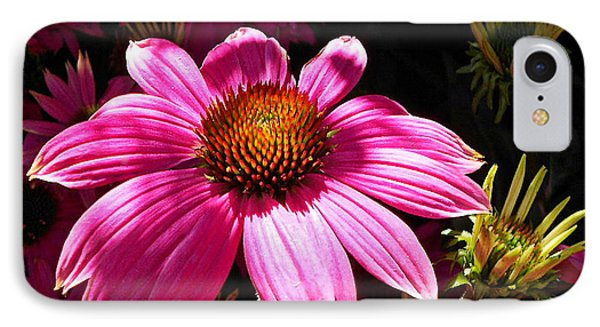 IPhone Case featuring the photograph Echinacea Blooms by Suzy Piatt