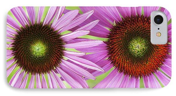 Echinacea Purpurea Rubinglow Pattern IPhone Case by Tim Gainey