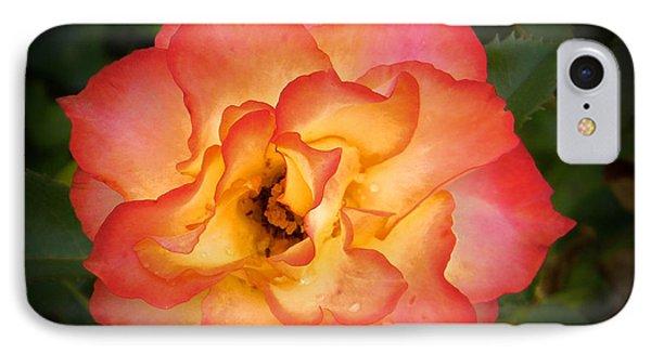 Effulgent Rose IPhone Case