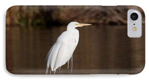 IPhone Case featuring the photograph Egret At Daybreak by Ruth Jolly