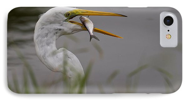 IPhone Case featuring the photograph Egret Having Lunch by Jerry Gammon