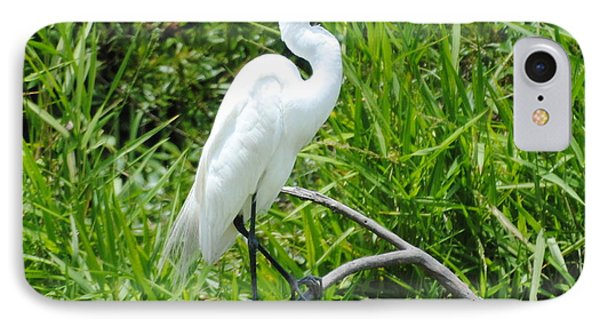 Egret Perching On Branch IPhone Case by Dan Williams
