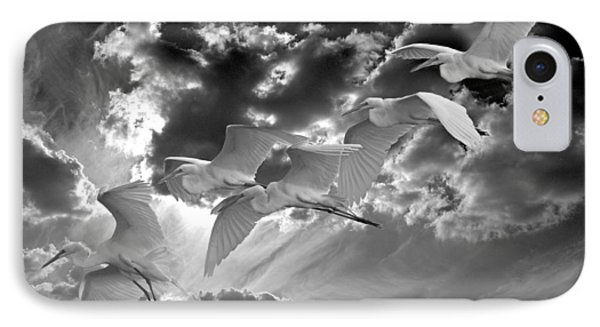 Egrets In Succession Bw IPhone Case
