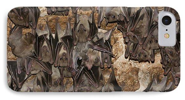 Egyptian Fruit Bat Rousettus Aegyptiacus IPhone 7 Case