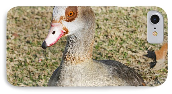 Egyptian Goose  Phone Case by Shoal Hollingsworth