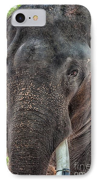 Elephant IPhone Case by Adrian Evans