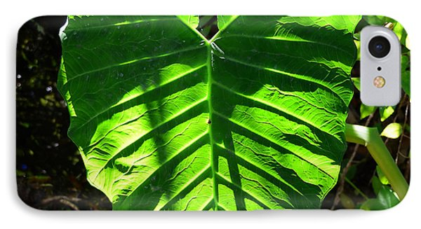 Elephant Ear Plant IPhone Case by David Lee Thompson