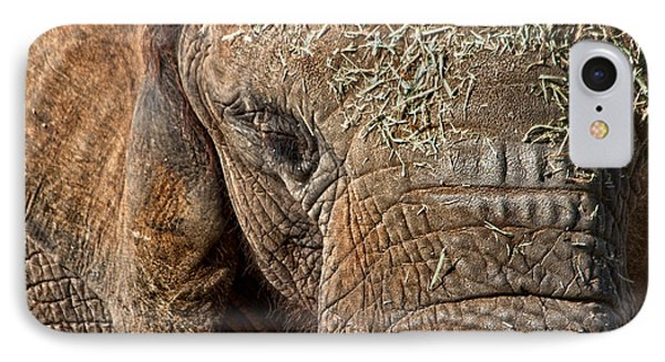 Elephant Never Forgets IPhone Case by Miroslava Jurcik