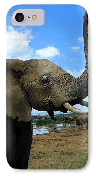 Elephant Posing IPhone Case